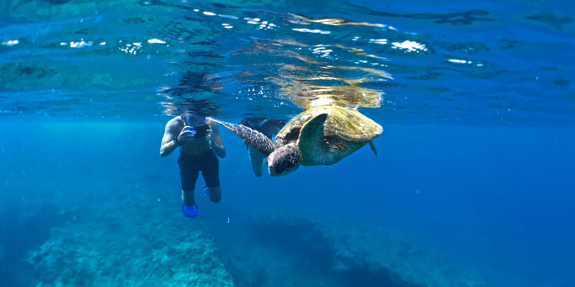North Shore Oahu snorkeling tour with sea turtles