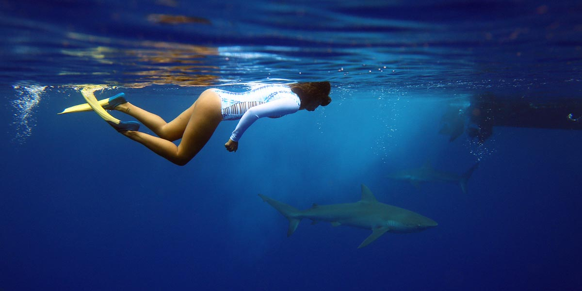 Oahu shark diving tours