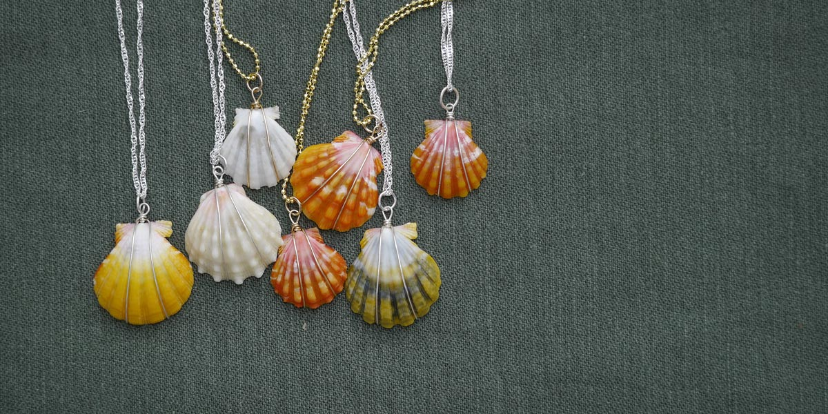 Hawaiian sunrise shells for sale